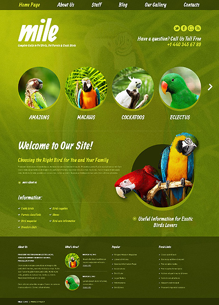 Exotic Birds Blog WordPress Theme